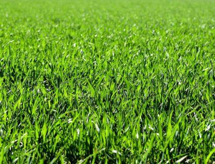 Gnojilo za travo vsebuje visoko vsebnost dušika